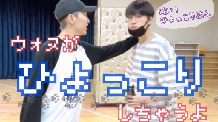 【SEVENTEEN Wonwoo】はい、ひょっこりはん − アフィリエイト動画まとめ