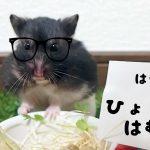 ひょっこりはん おもしろ荘ネタをハムスターバージョンでやってみた!おもしろ可愛い癒しハムスターHamsters imitated a Japanese comedian − アフィリエイト動画まとめ