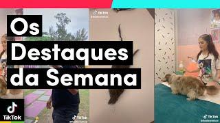 Olha os DESTAQUES DA SEMANA aí minha gente! | TikTok Brasil – アフィリエイト動画まとめ